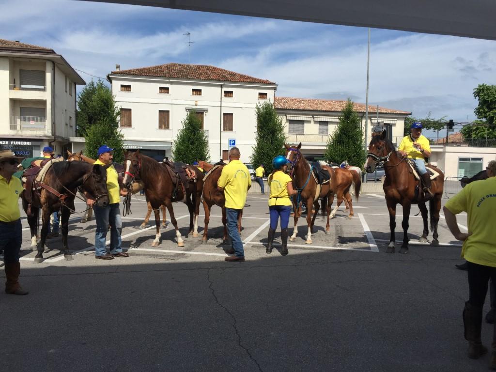 Cavalli in piazza 2015